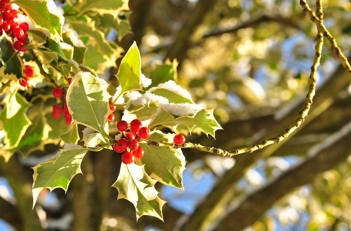 Jul og fællesskab